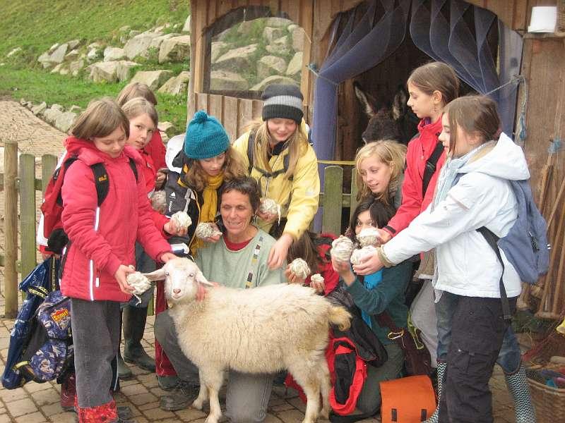 Vom Schaf Zur Wolle