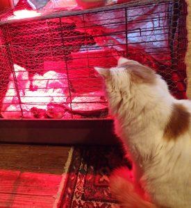 Katzen-Fernsehprogramm in der Küche