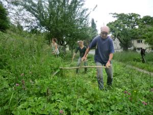 Senskurs für bunte Wildblumenwiesen (Kunzenhof) @ Lernort Kunzenhof