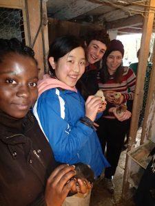 Schülerinnen des UWC mit den Küken