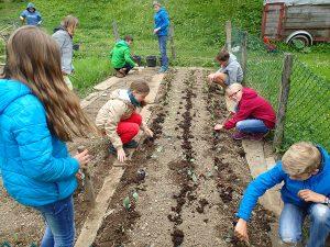 Die Kinder der Jahresgruppe Jupro bepflanzen das Gemüsebeet