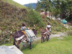 Zu Fuss zum Eselfest am Mundenhof