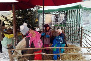 Schafe im Dienst beim Littenweiler Weihnachtsmarkt