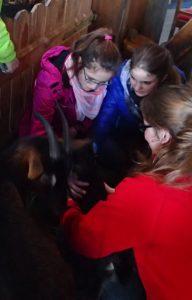 Die Kinder von KUK begrüßen das neugeborene Geißlein.