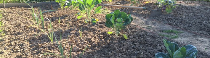 Schritt für Schritt zum eigenen Gemüsegarten
