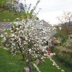 Der ganze Hof voller Blütenbräute