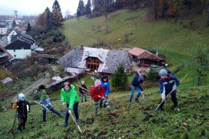 Vor dem Winter wird der feine Kompost auf den Wiesen verteilt