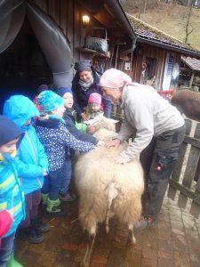Kindergartenkinder freuen sich über Goldas weiche warme Wolle