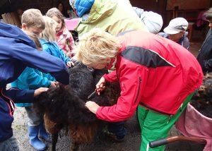 Am Schafschur Wollefest werden Zusammenhänge erlebbar