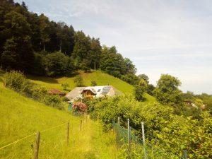 Im Juni liegen Wiesen und Weiden noch grün und saftig