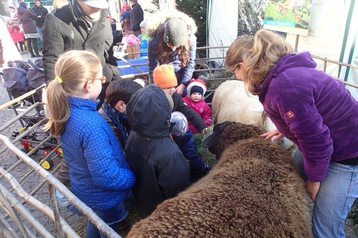 Schafe und Esel am Weihnachtsmarkt in Littenweiler