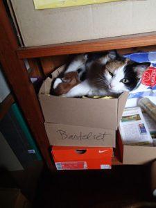 Sally braucht Tapetenwechsel und hat im Büro einen passenden Karton gefunden