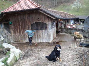 Natürlich wird jeden Morgen und jeden Abend der Stall sauber gemacht und die Tiere werden gefüttert
