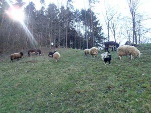 Der Wanderweg rings um die Kunzenhofer Weiden ist in dieser Zeit von Jung und Alt sehr beliebt
