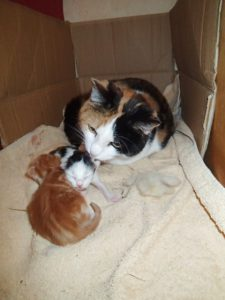 Am Frühlingsanfang bekommt Sally zwei süße Kätzchen