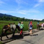 Eselwanderung und Tiere versorgen für Kinder ab 9 Jahre